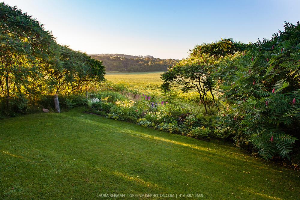 Perennial border in the early morning sun.