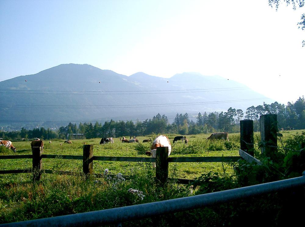 Austria meadow in summer