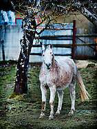A friendly but shy, muddy-white country horse in Dingy-Saint-Clair, France.