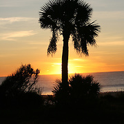 Palm Tree silhouetted by a brilliant sunrise on a Jekyll Island beach.