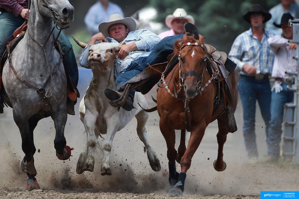 Greg Lamb fro Gore in action during the Open Steer wrestling during the Millers Flat Rodeo. Otago, New Zealand. 26th December 2011