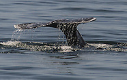 20150412 Whale Watching