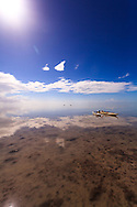 Kayakers enjoy the warm, shallow waters of Florida Bay in the southernmost part of Everglades National Park. WATERMARKS WILL NOT APPEAR ON PRINTS OR LICENSED IMAGES.<br /> <br /> Licensing: https://tandemstock.com/assets/62995492