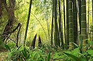 France, Languedoc Roussillon, Gard, Cévennes, Anduze, La Bambouseraie, Prafrance, bambous