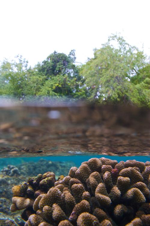 under water,photo,reef,coral.