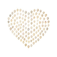 A modern take on the traditional Sailor's Valentine with Common Dove Snail shells (Columbella mercatoria) neatly arranged on a white background.