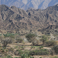 Dry natural Oasis in the Hahar mountains in Oman.<br />
