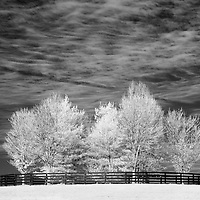 Fenced in trees surrounded by a horse pasture in rural Kentucky.  Infrared (IR) photograph by fine art photographer Michael Kloth.