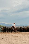 Cutting horses, cowgirl, Quarter Horse, Whitehall, Montana
