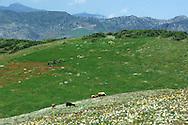 fields near Chefchaouen, Rif Mountains, Morocco