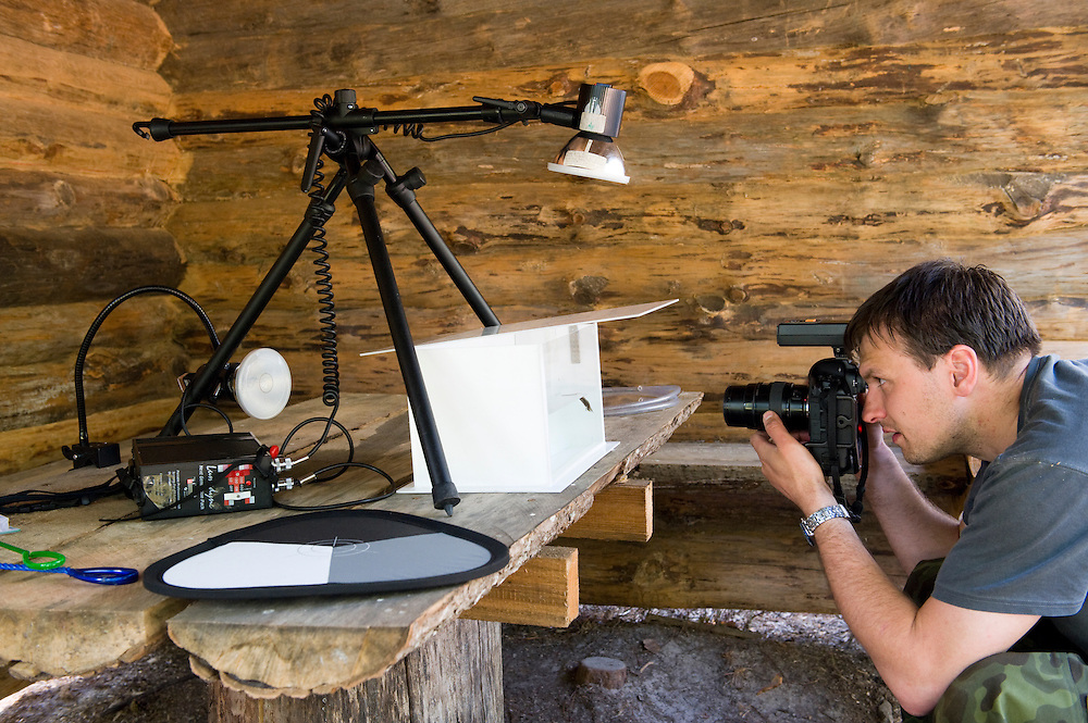 Jaanus Jarva photographing smooth newt in Niall Benvie's make-shift studio, Estonia