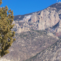 Green trees abound even in winter in the high deserts of New Mexico!
