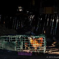 Trampa de langosta reutilizada en un rancho de la Sierra de San Francisco como jaula para gallos. Es común que algunos rancheros trabajen por temporadas en campos pesqueros cercanos, sobre todo cuando la sequía azota la región.