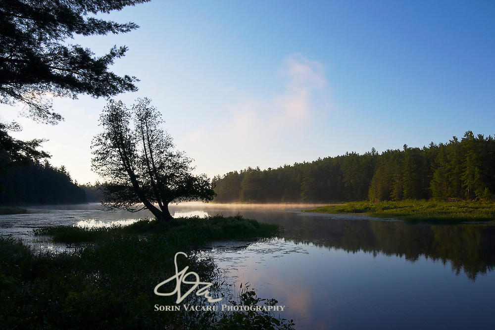 Early Morning Mist on the Barron River