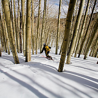 Spring skiing in the aspen forest