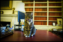 Chancellor George Osborne's cat Tabby Freya inside No11 Downing Street, Friday October 26, 2012. Photo By Andrew Parsons / i-Images