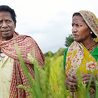 SRI RICE FARMER IN INDIA