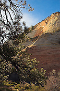 Late evening light is barely making it onto the rocks low in the canyons of Zion National Park in southern Utah.