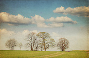 Row of sprouting trees on a spring day<br /> Prints &amp; more: http://society6.com/DirkWuestenhagenImagery/spring-day-aOs_Print