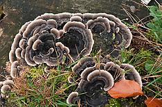 Houtzwammen, op hout groeiende paddenstoelen