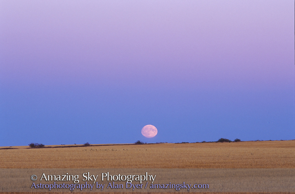 Full Moon rising in Earth's shadow and below Belt of Venus, October 1998<br /> <br /> 200mm telephoto lens<br /> <br /> taken from home in Alberta -- some deer are on the horion!