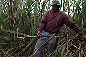 Costa Rica: COOPECAÑERA Fairtrade Sugar