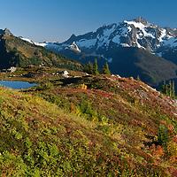 Mt. Shuksan, Pond, North Cascades; WA; Yellow Aster Butte