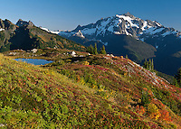 Mt. Shuksan, Pond, North Cascades; WA; Yellow Aster Butte