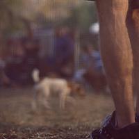 Dog Playground, Madison Square Park, New York, New York