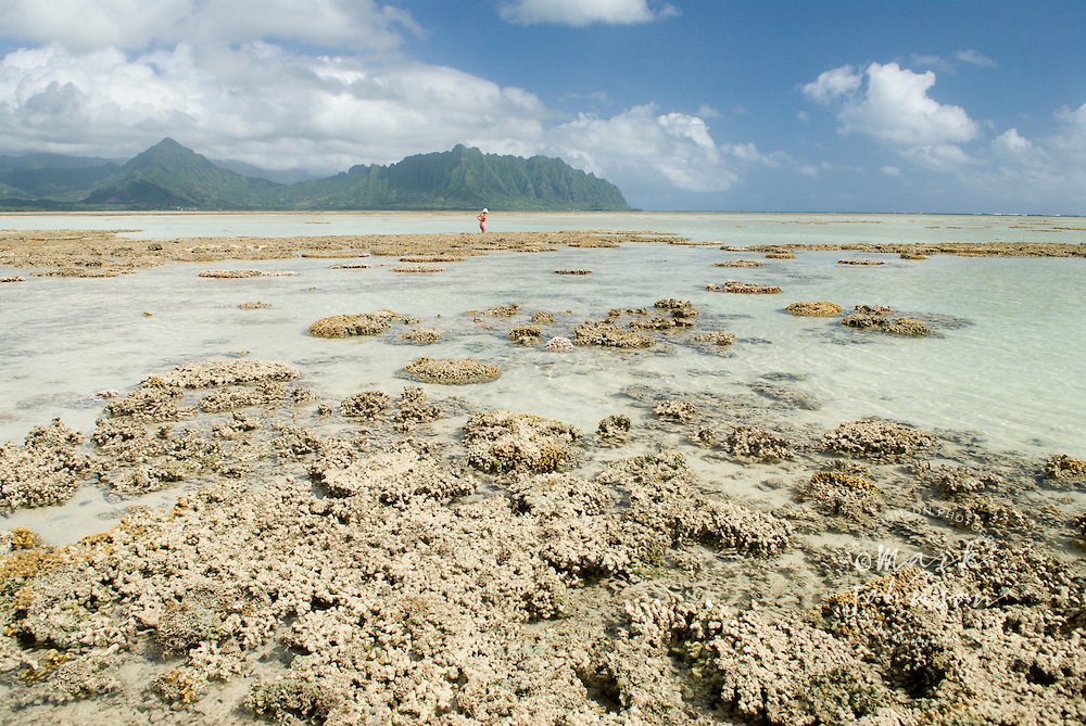 Woman walking among reefs at low tide, Kaneohe Bay, Hawaii