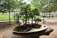 Miniature Bonsai Plants at Liu Fang Yuan / Huntington Botanical Gardens, San Marino, California