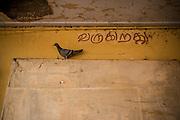 Image © Balaji Maheshwar/Falcon Photo Agency