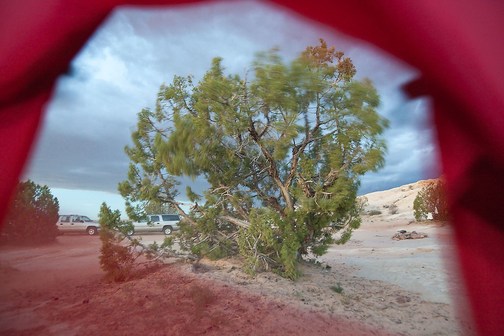 A tree blows in the wind under stormy skies, as seen from a tent at a campsite near the San Rafael Swell, Utah.