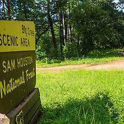 Big Creek Scenic Area, Sam Houston National Forest, Piney Woods, Texas.