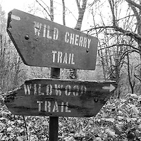 Along the 30 mile Wildwood Trail.<br />