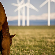 Horses grazing below wind turbines at a wind farm in Southern Wyoming.