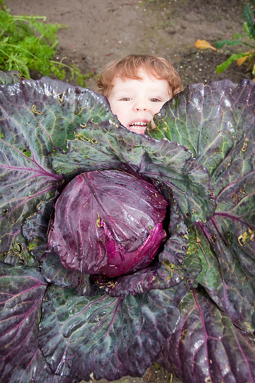 A little girls holds a giant cabbage that is bigger than she is. MR MRA