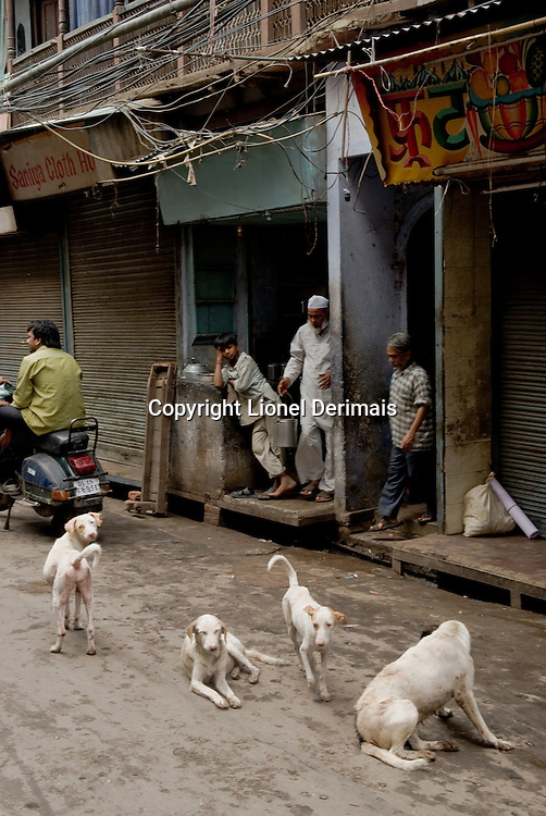 Stray dogs in Old Delhi, India.