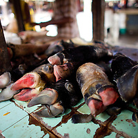 Cow hoofs at Basurto market near Cartagena, Colombia...Photo by Robert Caplin.