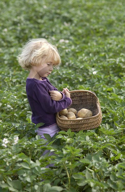 31/07/02 - GIRONDE - PUY DE DOME - FRANCE - Melanie DOURIS dans le champs de pommes de terre a Jules CARTAILLER - Photo Jerome CHABANNE