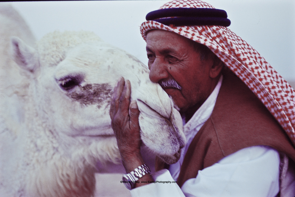 Sheikh Jaber Alamrah with one of his white camels in Hafar Al-Batin, Saudi Arabia
