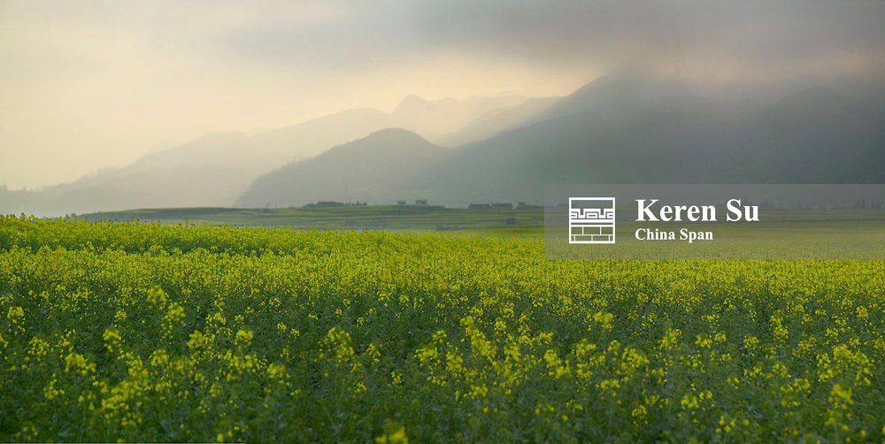 Landscape of canola fields, Luoping, Yunnan, China