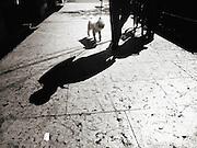 Venice, Italy, Street photography