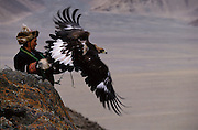 Golden Eagle being Released<br />