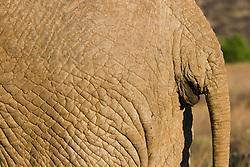 Elephant at Samburu National Reserve, located on the banks of the Ewaso Ng'iro river in Kenya; Africa. There is a wide variety of animal and bird life seen at Samburu National Reserve / Elefante em Samburu, localizado no Rift Valley, no Quenia. Eh um dos grandes parques nacionais do Quenia, na Africa importante refugio de vida selvagem