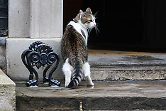 2016-08-02 Larry and Palmerston in ongoing feline territorial dispute at Downing Street
