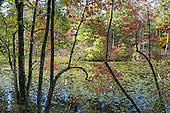 TN: Appalachia: Bays Mountain Park