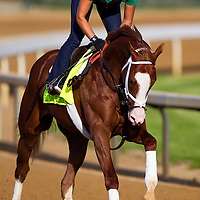 Kentucky Derby contender Will Take Charge gallops at Churchill Downs in Louisville, KY on May 02, 2013. (Alex Evers/ Eclipse Sportswire)