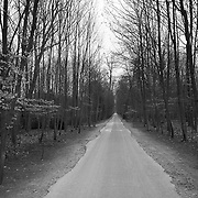 Small one lane road in the woods near Chantilly, France