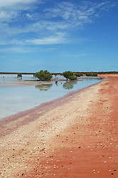 Mangroves growing in fine mud at Crab Creek to the south of Broome on Roebuck Bay in the Kimberley wet season.